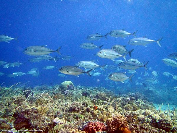 "Publikasi ""Prosiding Simposium Nasional Pengelolaan Perikanan Karang Berkelanjutan Indonesia 2015"""